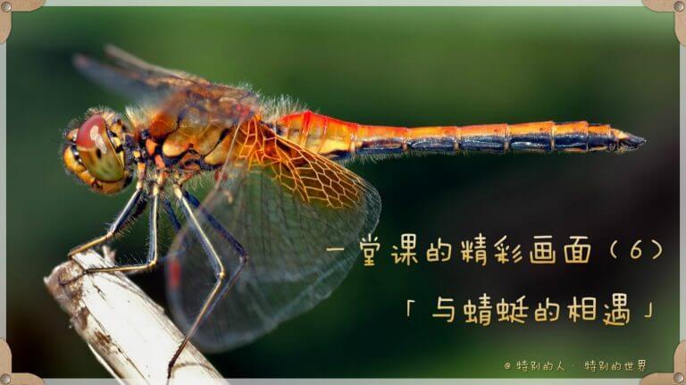 与蜻蜓的相遇